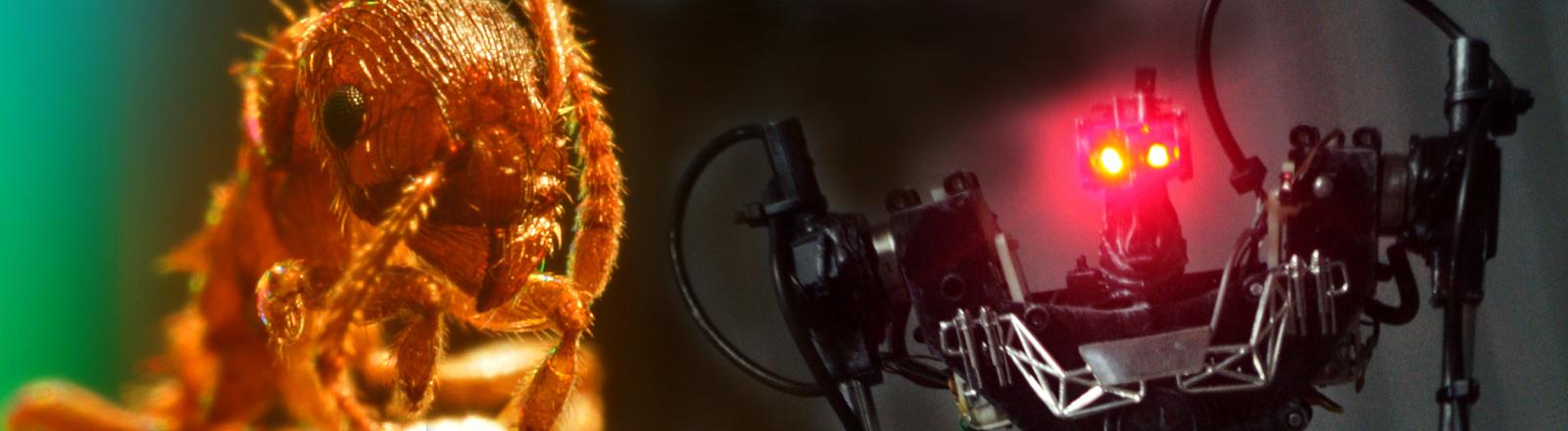 Eine Ameise und ein Killer-Roboter stehen sich gegenüber.