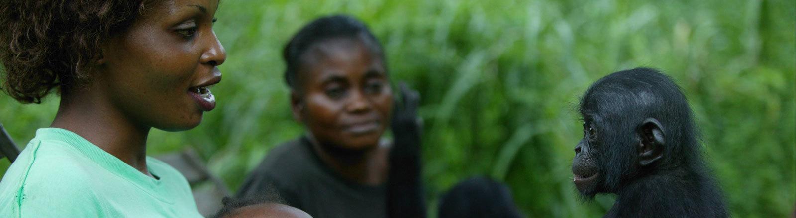 Pflegemutter für Bonobowaise im Kongo