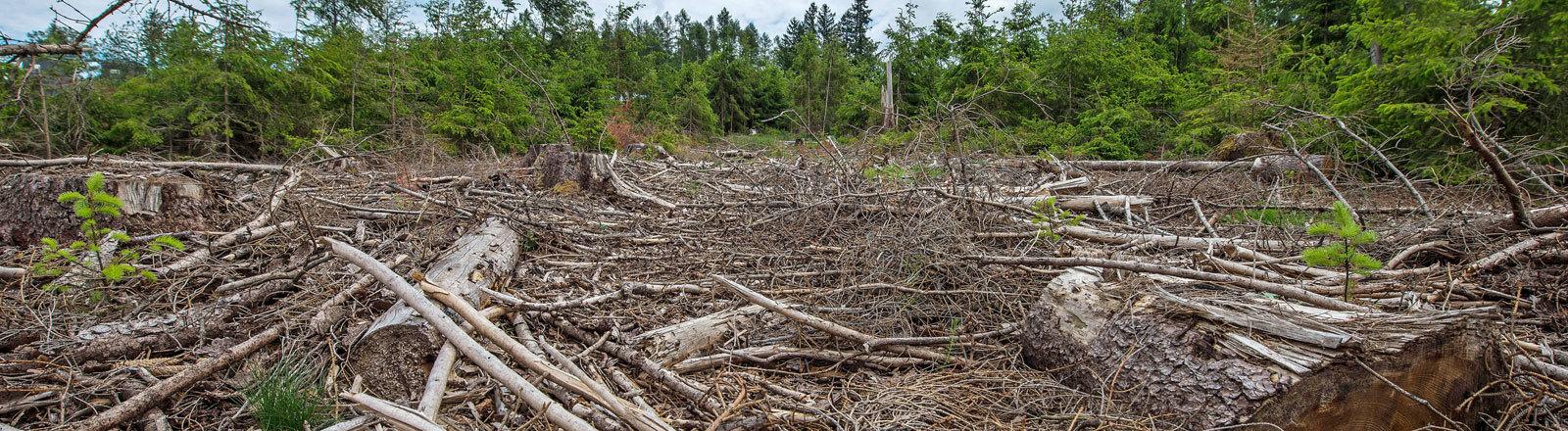 Abgestorbene Baeume bei Glashuetten im Taunus (Foto vom 24.05.2020). Die Trockenheit ist die Ursache fuer die Schaeden. Der Klimawandel gilt als einer der Hauptgruende dafuer.