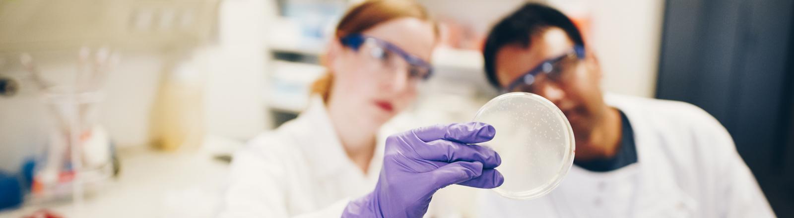 Wissenschaftler betrachten eine Petrischale.