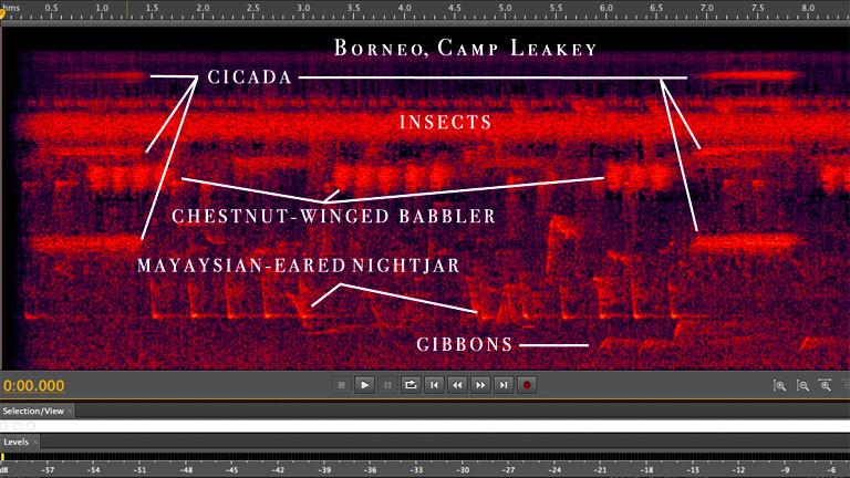 Digitale Darstellungen von Sound.
