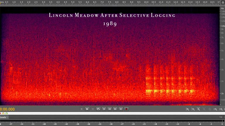 Digitale Darstellung von Sound.