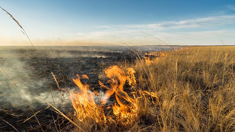 Steppenfeuer in der mongolischen Steppe