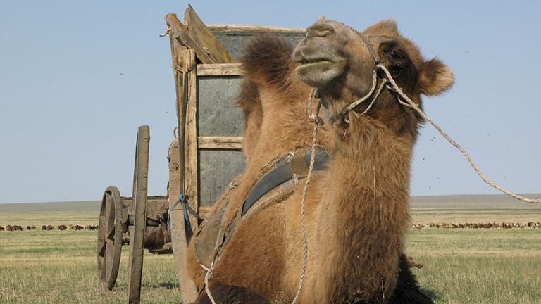 Kamelkarren von Nomaden in der mongolischen Steppe