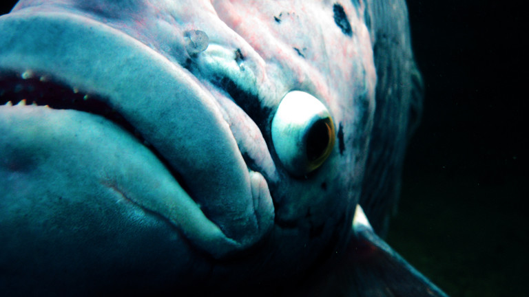 Die Nahaufnahme eines Fisches.
