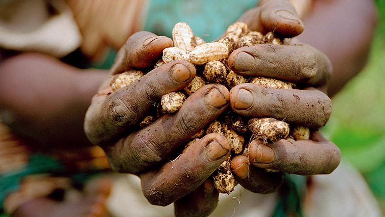 Frau mit geernteten Erdnüssen in den Händen, Projekt der Deutschen Welthungerhilfe in Kongo.