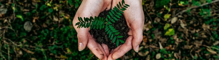 Eine kleine Pflanze wird von einer Hand gehalten.