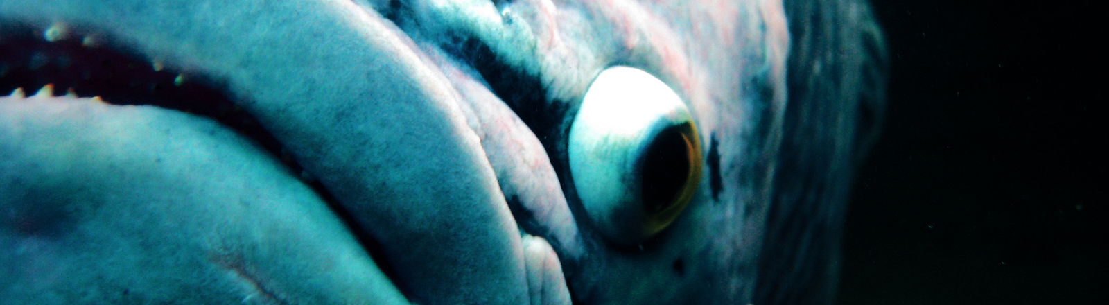 Nahaufnahme eines Fisches