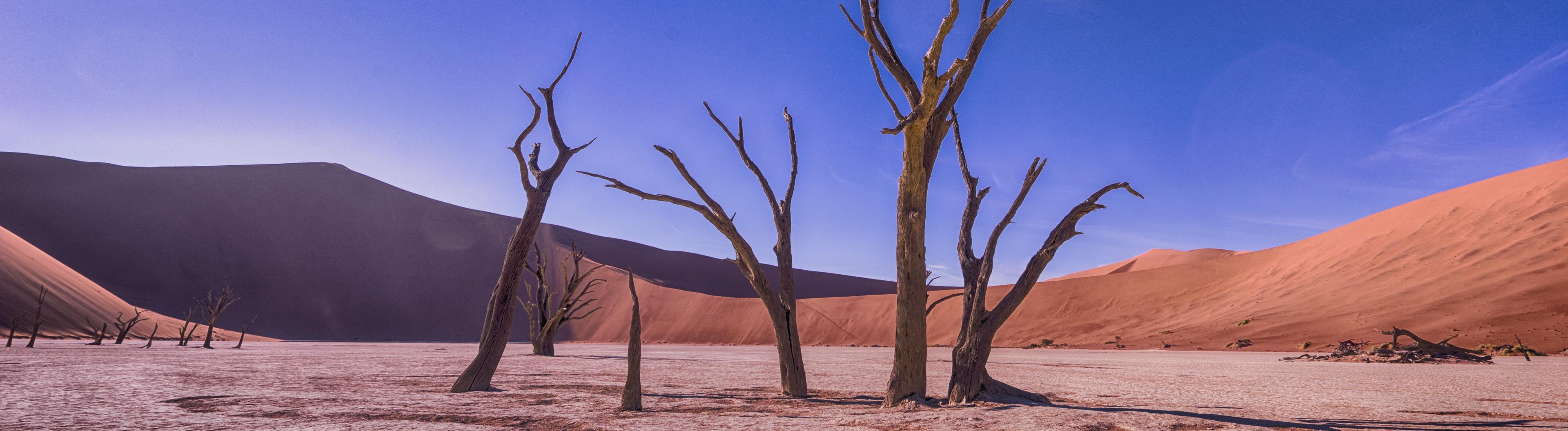 Vertrocknete Bäume in der Wüste vor blauem Himmel