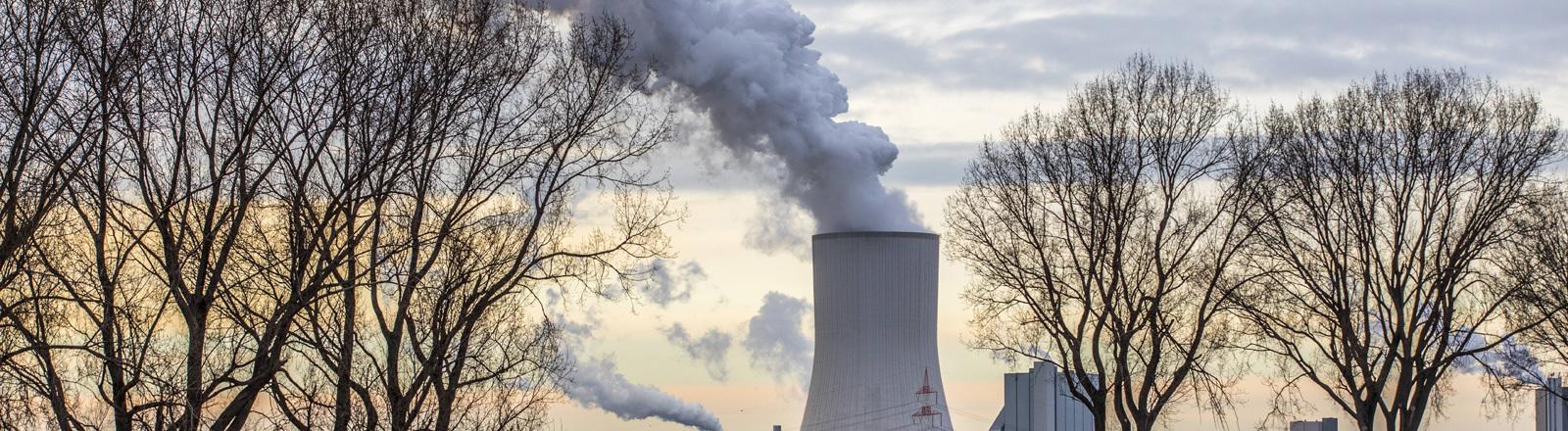 Bäume neben dem Kühlturm eines Kohlekraftwerks.