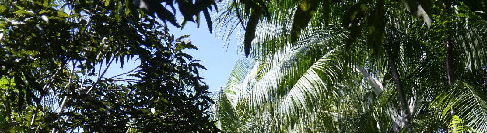 Der Regenwald am Amazonas in Brasilien