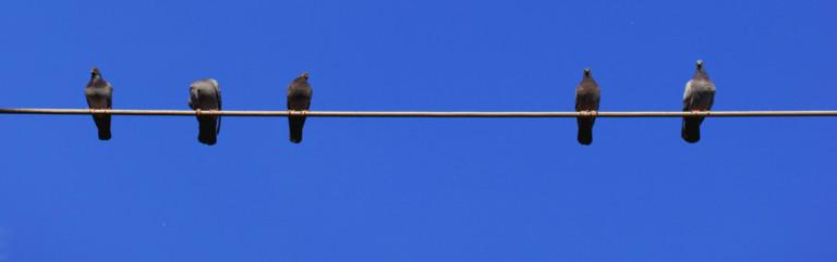 Tauben auf Hochspannungsleitung