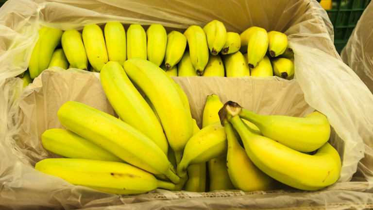 Neue Banane übersteht Pilzkrankheit