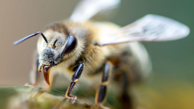 EU verbietet weiteren Bienen-Killer