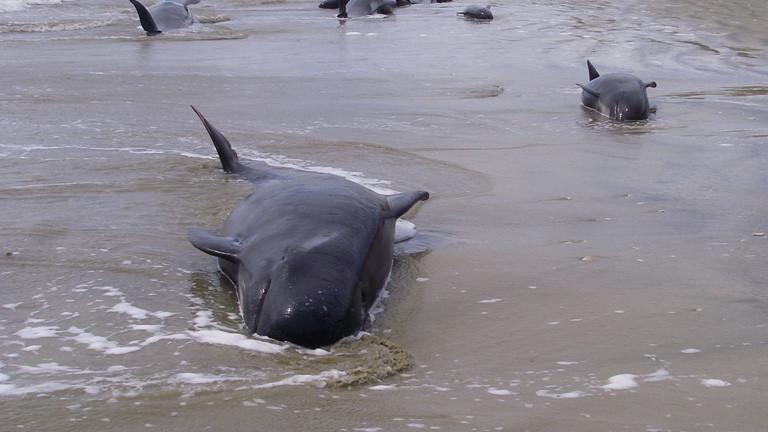 Satelliten finden gestrandete Wale