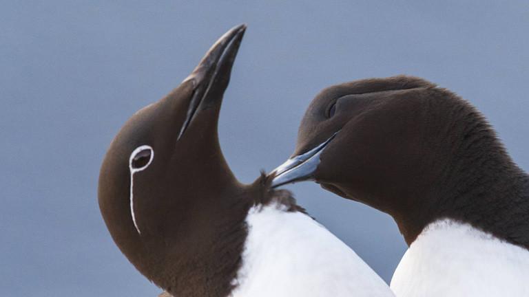 """""""Blob"""" sorgt für Massensterben von Seevögeln"""