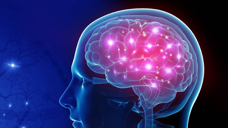 Gehirn und Schädel entwickeln sich unabhängig