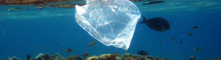 Eine Plastiktüte treibt im Meer