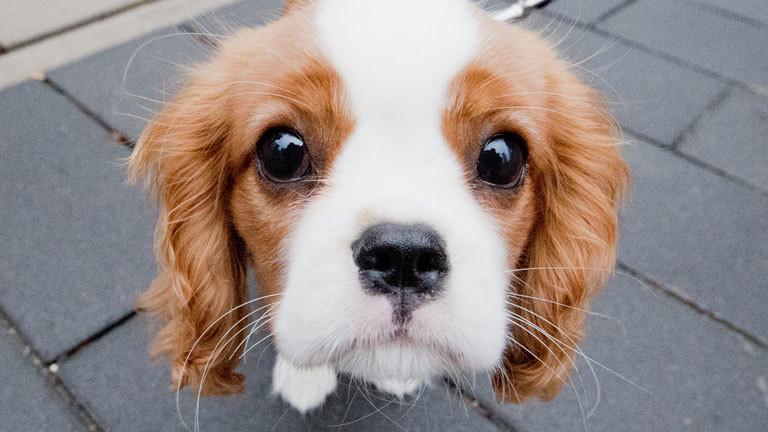 Tierische Mimik überlebensvorteil Hundeblick Dlf Nova