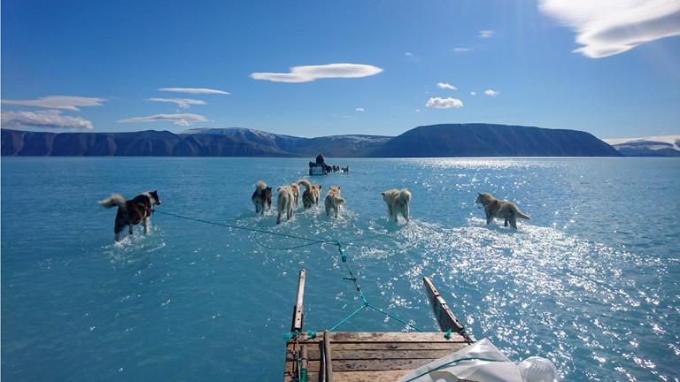 Hunde laufen in Grönland über Wasser