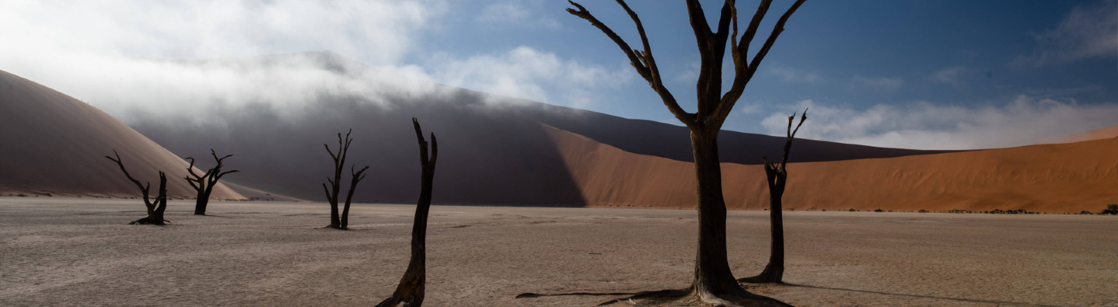 Tote Bäume und auflösender Nebel im Deadvlei, Sossusvlei Namib Naukluft Nationalpark, Namibia, Januar 2021, Symbolfoto Klimawandel
