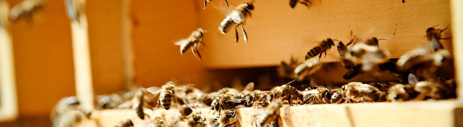 Bienen suchen einen Ort mit Löchern und Zwischenräumen