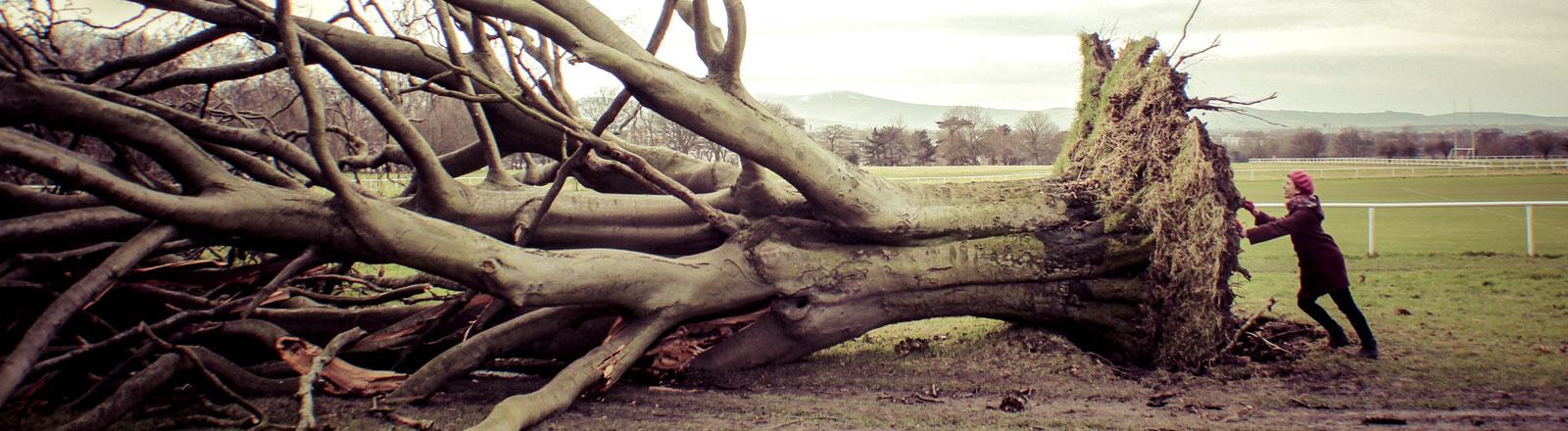 Eine Frau versucht einen entwurzelten Baum wegzuschieben
