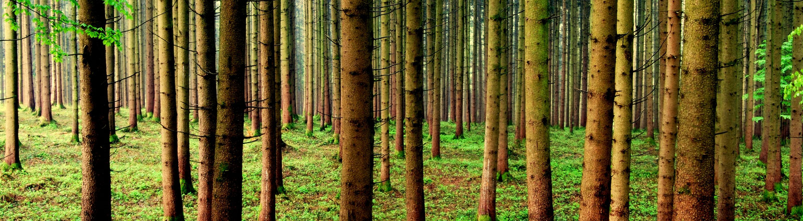 Eine kleines Waldstück