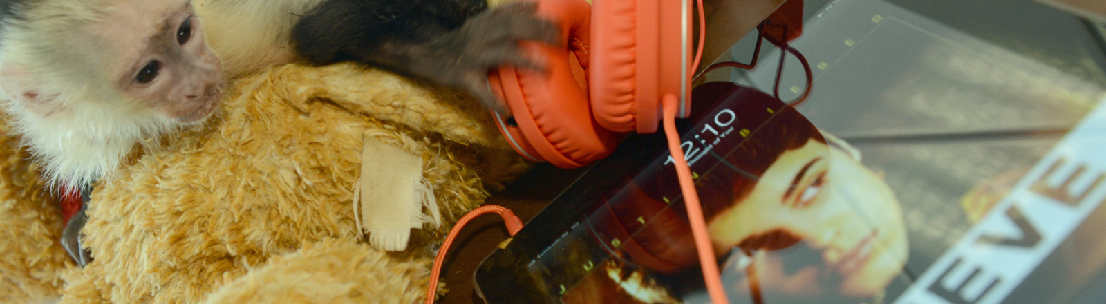 Der Affe Mally des kanadischen Sängers Justin Bieber hockt am 02.04.2013 in München (Bayern) im Tierheim München-Riem auf einem Stofftier, das neben ein iPad gelegt wurde, auf dem ein Foto des Sängers zu sehen ist.