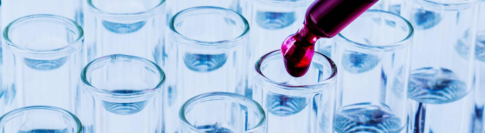 Eine gefärbte Flüssigkeit wird mit einer Pipette in Reagenzgläser getropft.