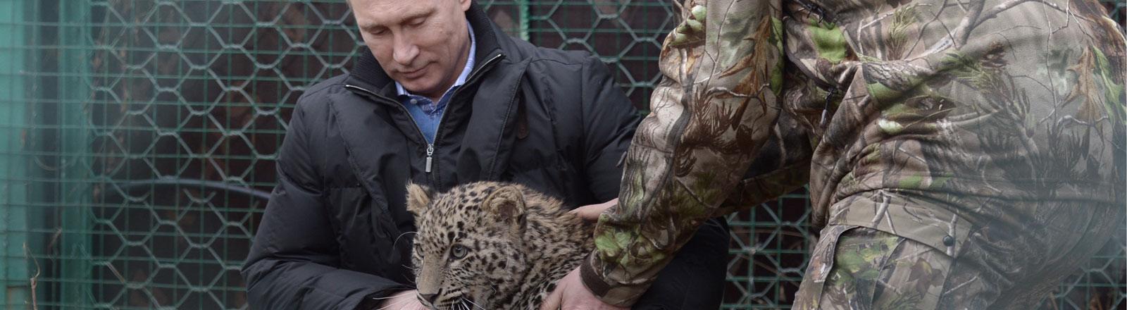 Wladimir Putin besucht eine Leoparden-Aufzuchtstation in Sotschi.