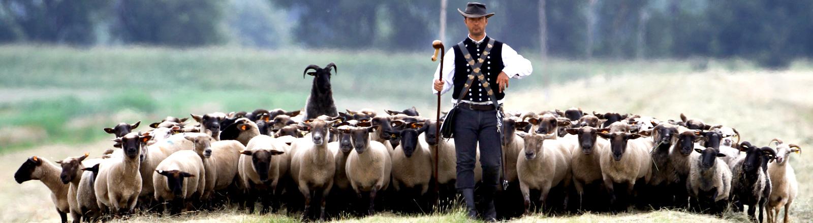 Ein Schäfer steht vor seiner Schafherde