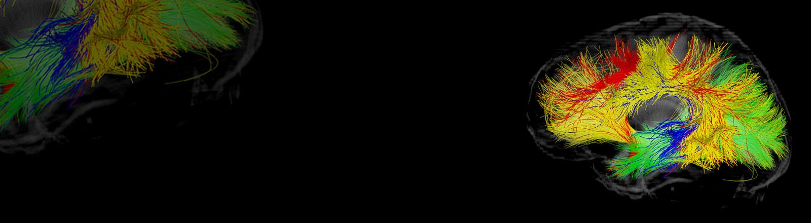 Eine abstrakte, schematische Darstellung eines Gehirns.