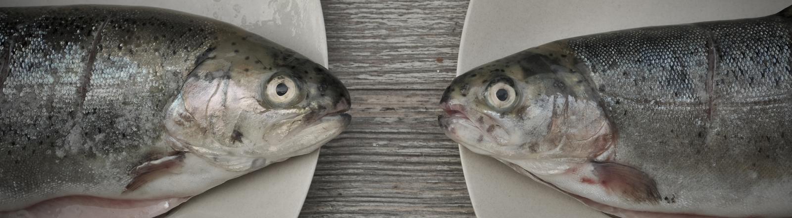 Zwei Forellen, die sich auf Tellern gegenüber liegen