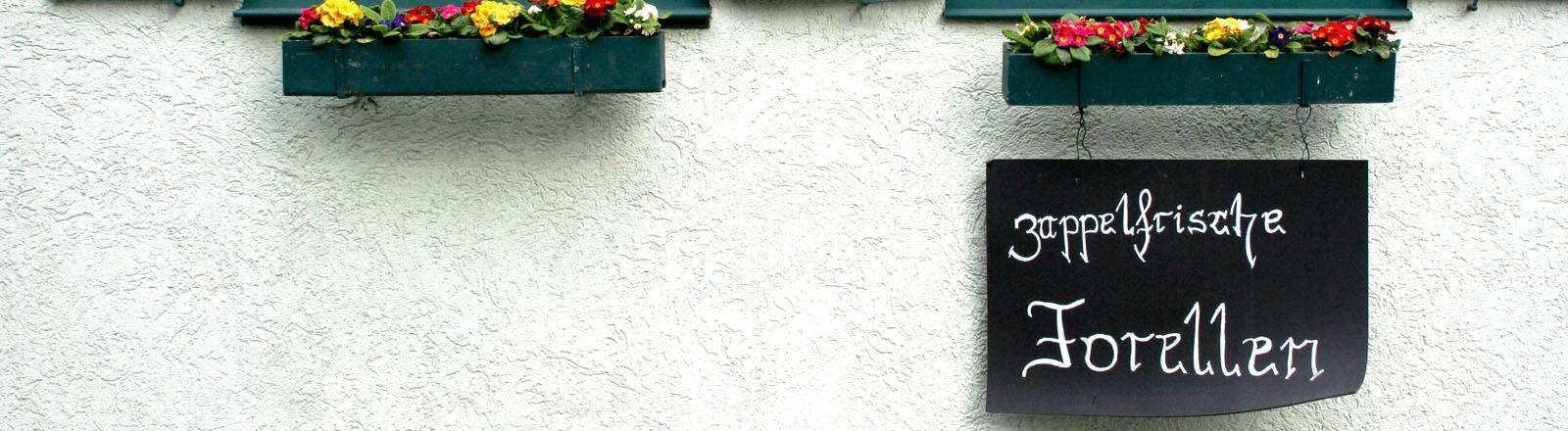 Fenster mit grünen Läden und darunter ein Schild auf dem steht: zappelfrische Forellem