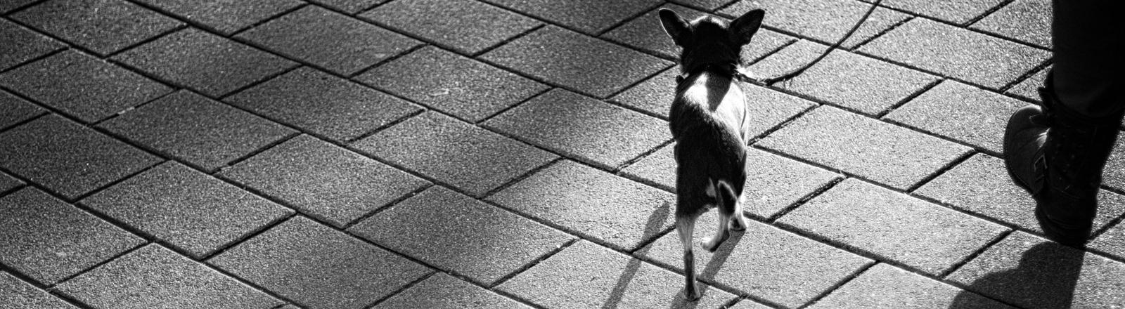 Ein kleiner Hund an der Leine