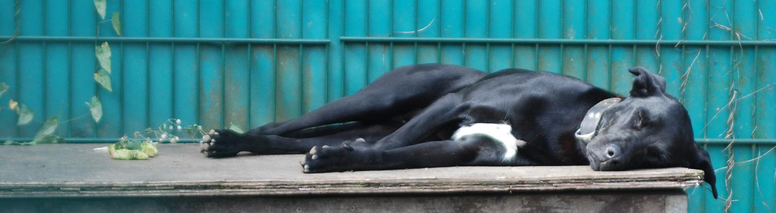 Ein Hund auf seiner Hundehütte.