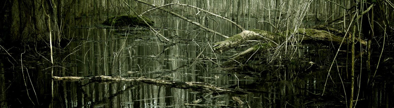 Ein Sumpf mit Bäumen