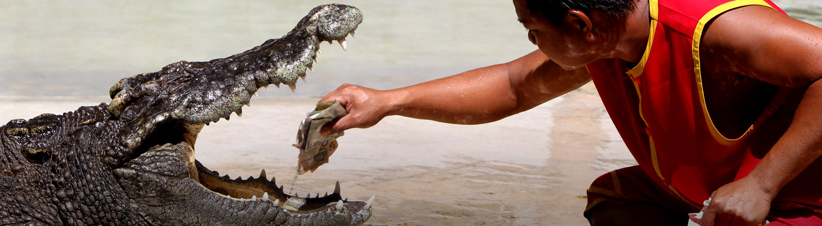Ein Mann steckt seine Hand in das Maul eines Krokodils