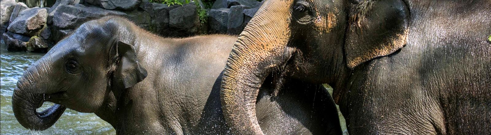 Elefanten im Berliner Zoo