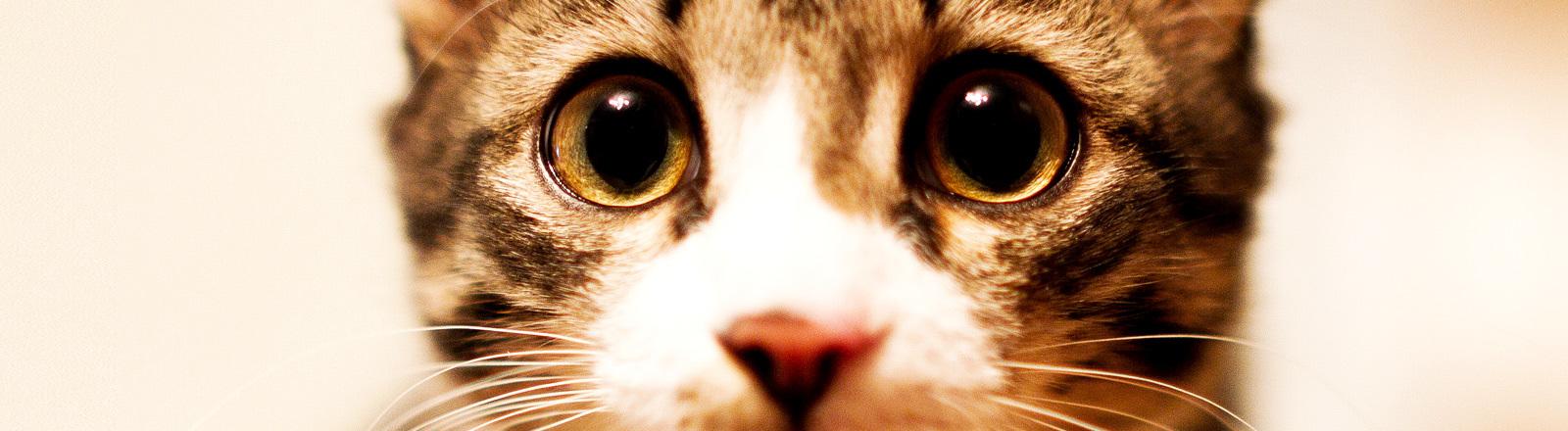 Traurig schauende Katze