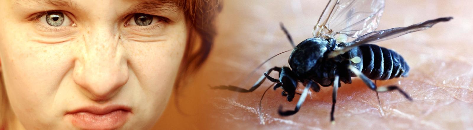 Collage: angewidertes Gesicht und Kriebelmücke