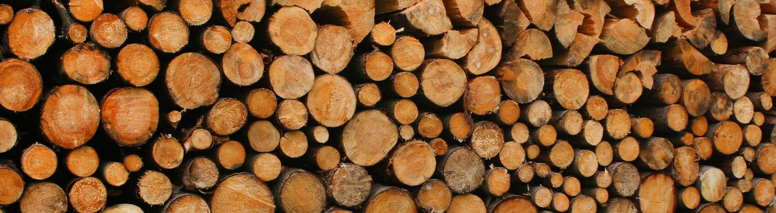 Abgesägte Baumstämme von vorne