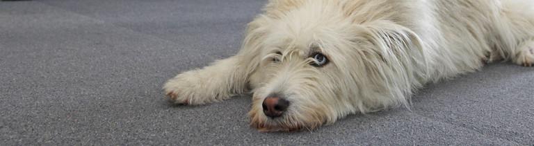 Hund am Arbeitsplatz