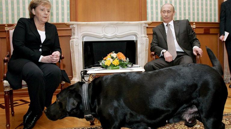 Wladimir Putin und Angela Merkel im Hintergrund, im Vordergrund Putins Labrador Koni.