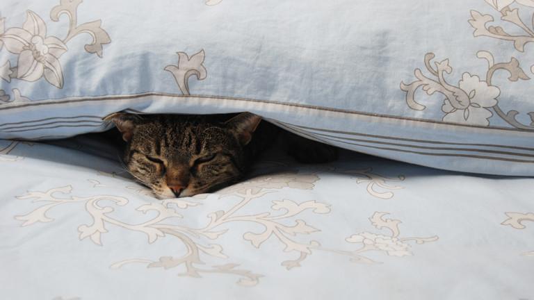 Katze, die unter einer Bettdecke liegt.