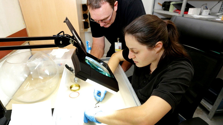 Zwei Mitarbeiter untersuchen Bettwanzen unter dem Mikroskop