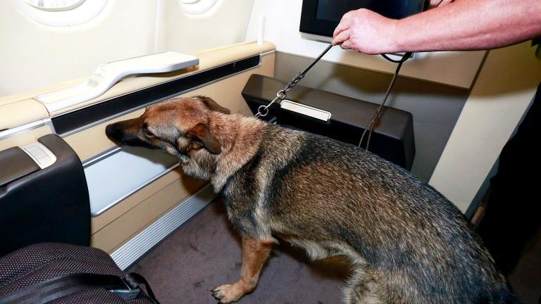 Ein Suchhund soll im Flugzeug Bettwanzen erschnüffeln.