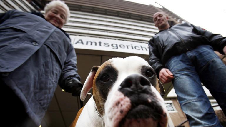 Bulldogge Clyde mit potenziellem Herrchen und Frauchen vor dem Amtsgericht Köln
