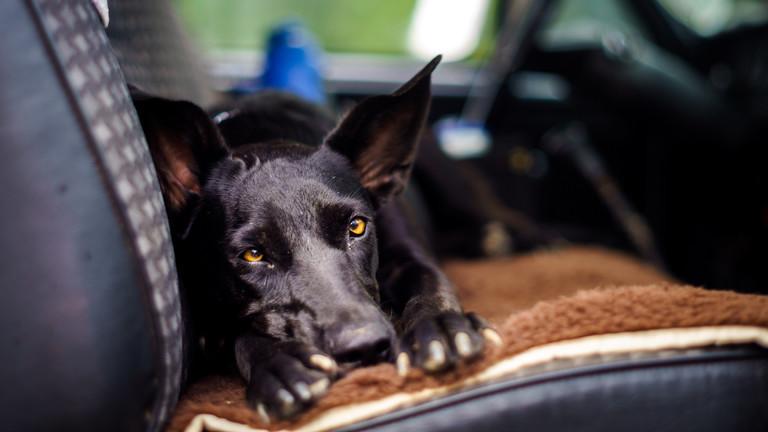 Sensor für Tiere und Kinder im Auto